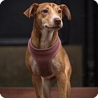 Adopt A Pet :: Jubilant Jingles - Madison, NJ
