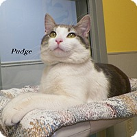 Adopt A Pet :: Pudge - Dover, OH