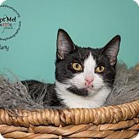 Adopt A Pet :: Marty - Freeport, NY
