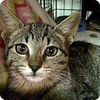 Adopt A Pet :: Tilly - East Brunswick, NJ