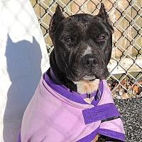 Adopt A Pet :: Trina - Carmel, NY