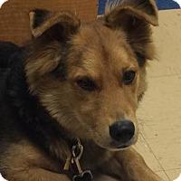Adopt A Pet :: Short Stop - Von Ormy, TX
