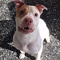 Adopt A Pet :: Jane - El Cajon, CA