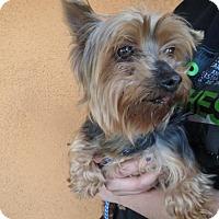 Adopt A Pet :: Angel #3 - Moreno Valley, CA