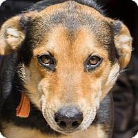 Adopt A Pet :: Dakota - Reidsville, NC