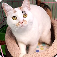 Adopt A Pet :: Lola - Key Largo, FL