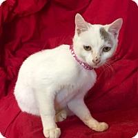 Adopt A Pet :: ELSIE - Santa Monica, CA