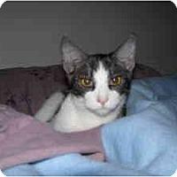 Adopt A Pet :: Jeremy - Morgan Hill, CA