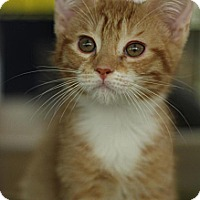 Adopt A Pet :: Tonto - Sacramento, CA