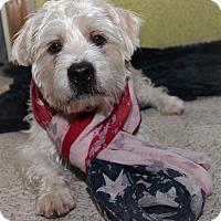 Adopt A Pet :: Jasper - Windermere, FL