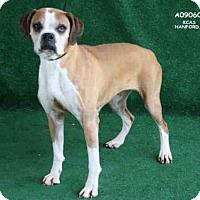 Adopt A Pet :: *GRETCHEN - Hanford, CA