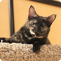 Adopt A Pet :: Afina - Carlisle, PA