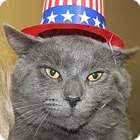 Adopt A Pet :: DONNY - Clayton, NJ
