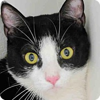 Adopt A Pet :: TOM - Bonita, CA