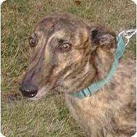 Adopt A Pet :: Blitzen - Fremont, OH