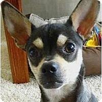 Adopt A Pet :: Pan - Kingwood, TX