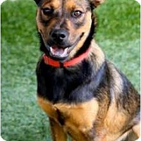 Adopt A Pet :: Forrest - Mission Viejo, CA