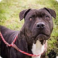 Adopt A Pet :: Iggy - El Campo, TX
