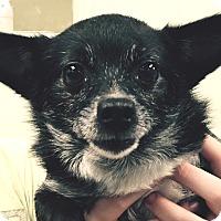 Adopt A Pet :: Lela - Orlando, FL