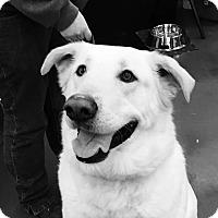 Adopt A Pet :: Champ - Rochester/Buffalo, NY