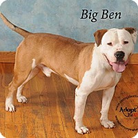 Pit Bull Terrier Mix Dog for adoption in Topeka, Kansas - Big Ben