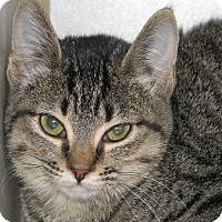 Adopt A Pet :: Willa - Ruidoso, NM