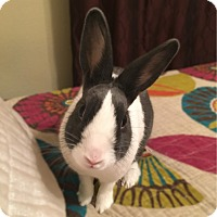 Adopt A Pet :: Grayson - Williston, FL