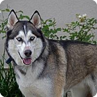 Adopt A Pet :: Bowie - San Diego, CA