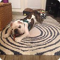 Adopt A Pet :: Diesel - Odessa, FL