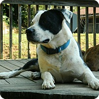 Adopt A Pet :: flinch -$100 - Spring Valley, NY