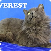 Adopt A Pet :: Everest - Carencro, LA