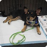 Adopt A Pet :: Kiki - Lodi, CA