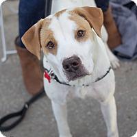 Adopt A Pet :: Gabby - Grand Rapids, MI