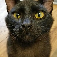 Adopt A Pet :: Pop - Monrovia, CA