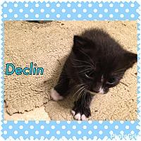Adopt A Pet :: Declin - Jerseyville, IL