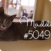 Adopt A Pet :: Maddie - Alvin, TX