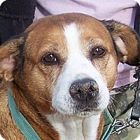 Adopt A Pet :: Missy - Byrdstown, TN