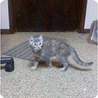 Adopt A Pet :: DUECES&SHELLY - Clay, NY