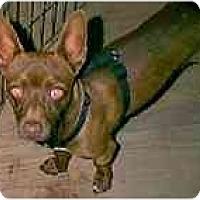 Adopt A Pet :: Ludwig - dewey, AZ