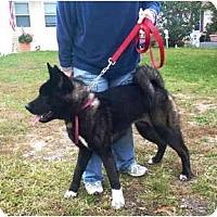 Adopt A Pet :: Savannah - East Amherst, NY