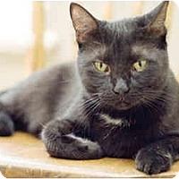 Adopt A Pet :: Cesar - Markham, ON