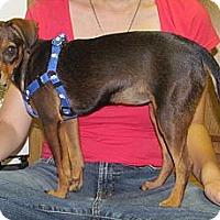 Adopt A Pet :: Sookie - Anaheim, CA