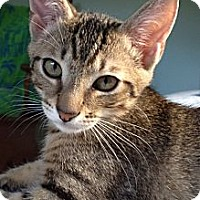 Adopt A Pet :: Tavi - Vero Beach, FL