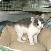Adopt A Pet :: Tinker - Winter Haven, FL