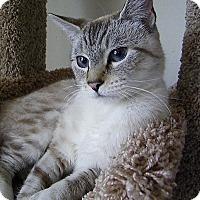 Adopt A Pet :: Buttons - Alexandria, VA