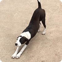 Adopt A Pet :: Diaz - McLoud, OK