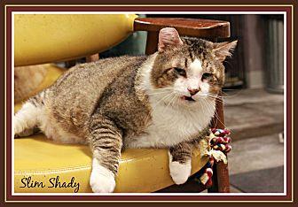 Domestic Shorthair Cat for adoption in New Richmond,, Wisconsin - Slim Shady