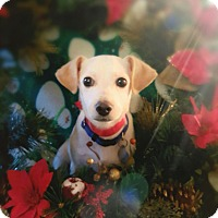 Adopt A Pet :: Billy - Knoxville, TN