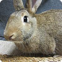 Adopt A Pet :: Hopscotch - Newport, DE