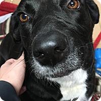 Adopt A Pet :: Susie Q - Huntsville, AL